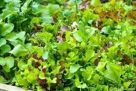 Salade mélangée 250gr