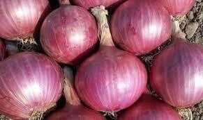 Oignons rouges kg