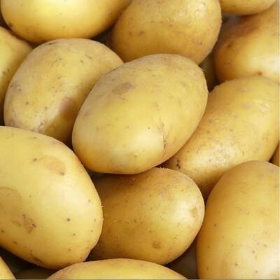 Charlotte pomme de terre
