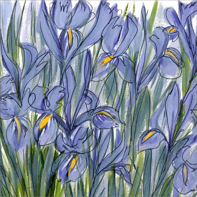 Irises (Iris reticulata) Irish: íris