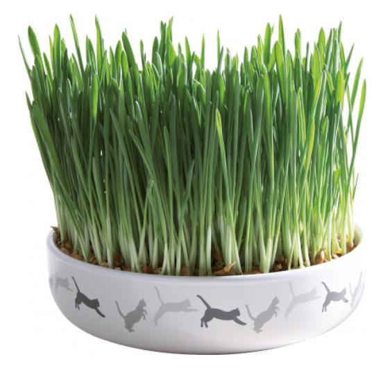 Ecuelle en céramique avec herbe à chat