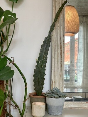 Grand cactus artificiel