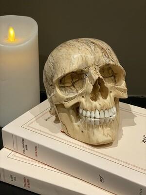 Vanité - crâne humain en bois