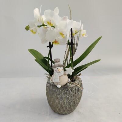 Orchidee Weihnachtlich Geschmückt