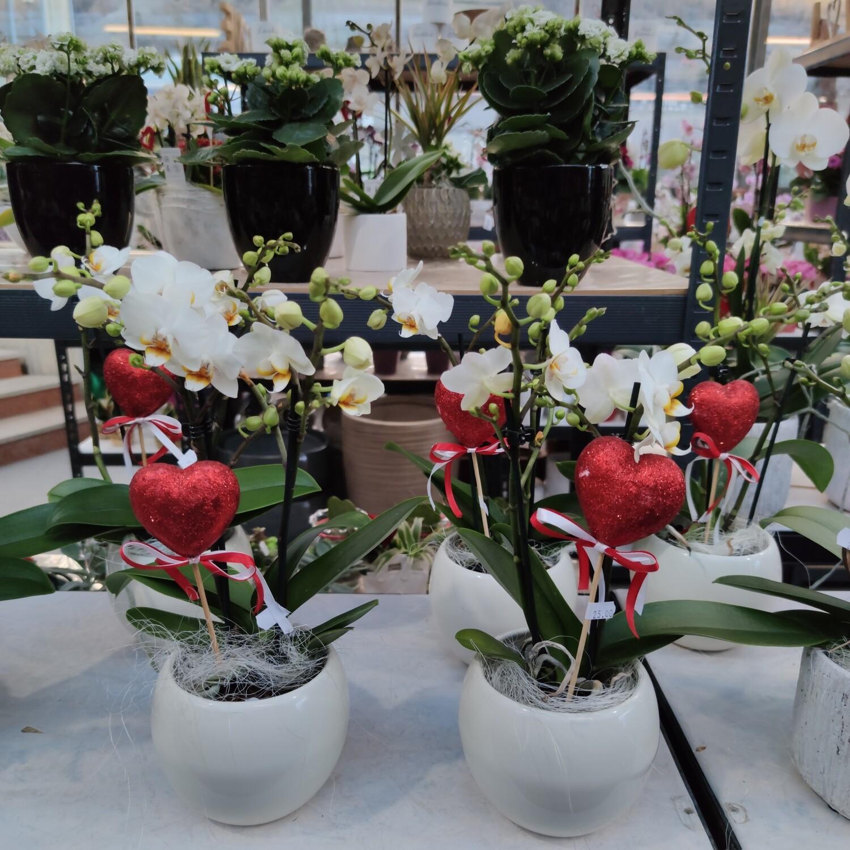 Orchidee mit Übertopf und Deko
