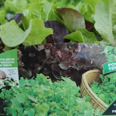 Eichblatt Salat (9 Pflanzen)