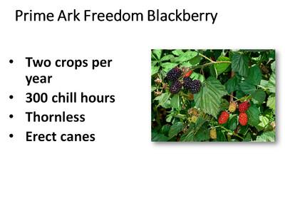 Blackberry, Prime Ark Freedom