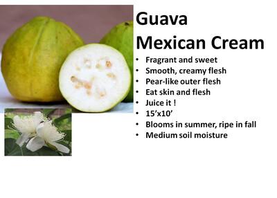 Guava, Mexican Cream