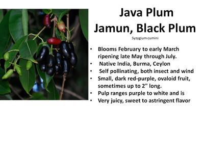 Plum, Java