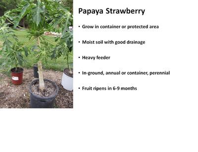 Papaya, Strawberry