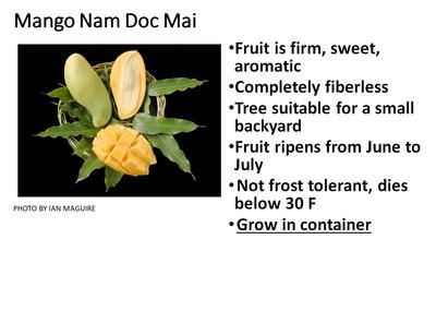 Mango, Nam doc Mai