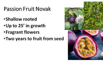 Passion Fruit, Novak
