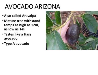 Avocado, Arizona