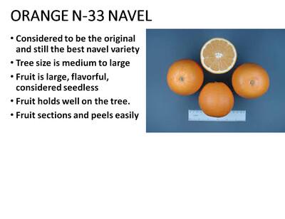 Orange, Navel N-33