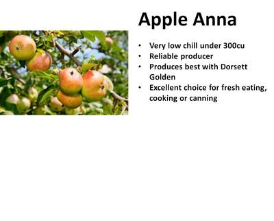 Apple, Anna
