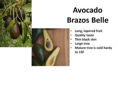 Avocado, Brazos Belle ™