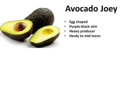 Avocado, Joey ™