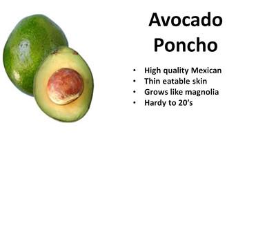 Avocado, Pancho