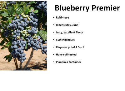 Blueberry, Premiere