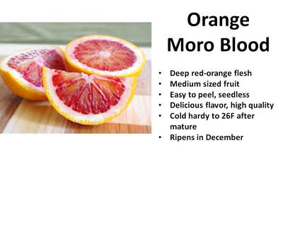 Orange, Moro Blood