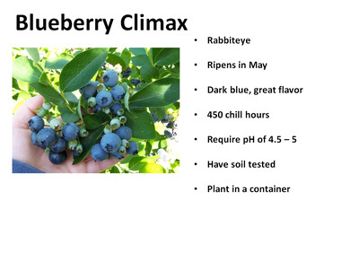 Blueberry, Climax