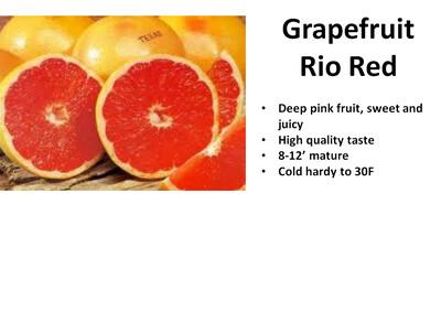 Grapefruit, Rio Red
