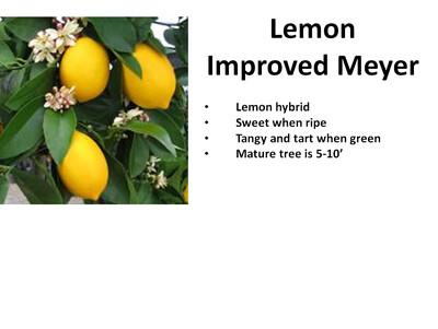 Lemon, Improved Meyer