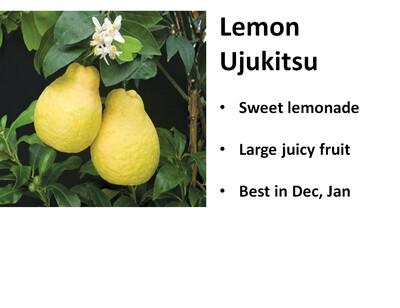 Lemon, Ujukitsu Sweet