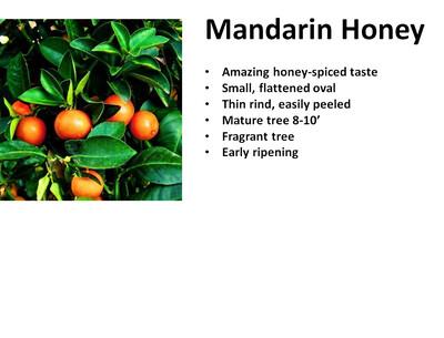 Mandarin, Honey
