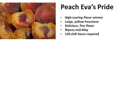 Peach, Eva's Pride