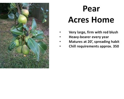Pear, Acres Home