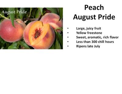 Peach, August Pride