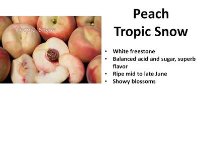 Peach, Tropic Snow