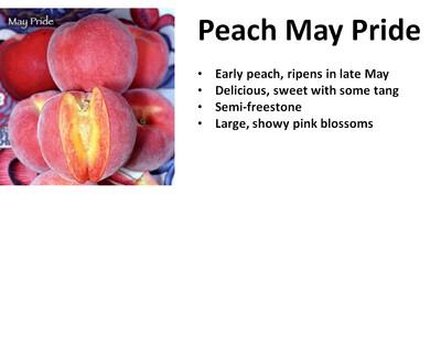 Peach, May Pride