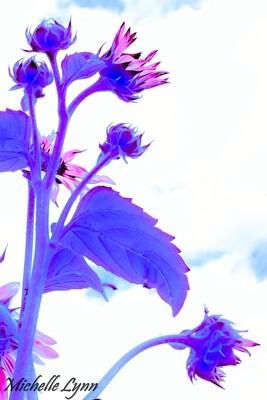 Mauve Sunflower set