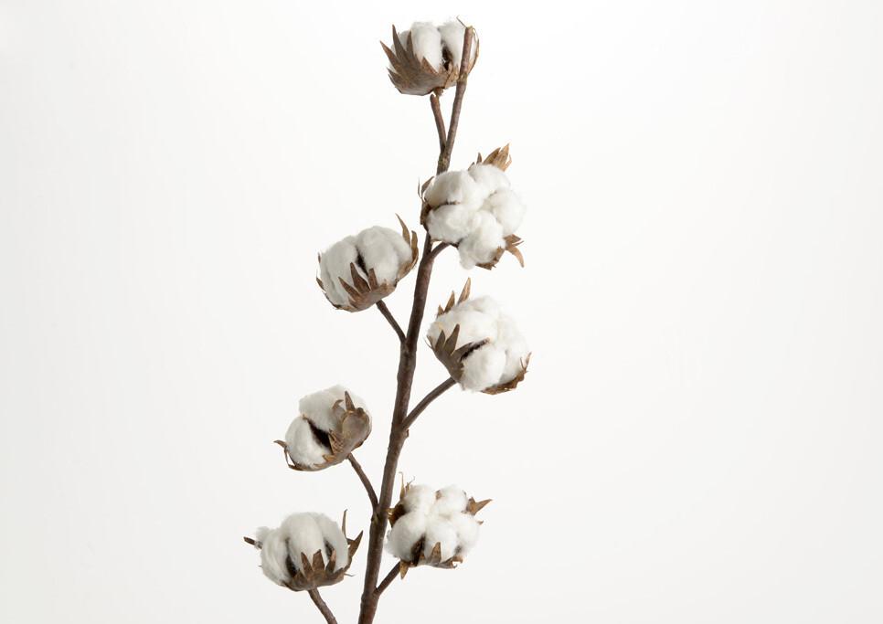 Branche coton H76