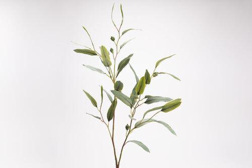Eucalyptus Saligna H107 VE
