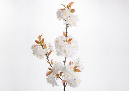 Cerisier du japon h115 blanc