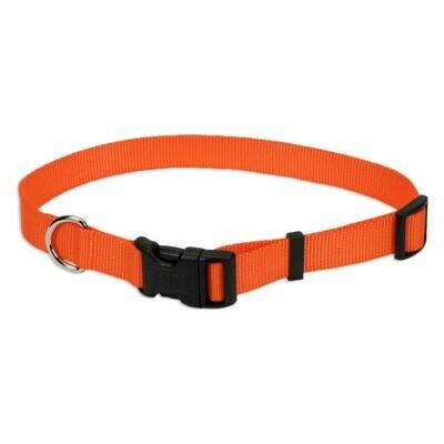 Coastal Adjustable Tuff Dog Collar Orange