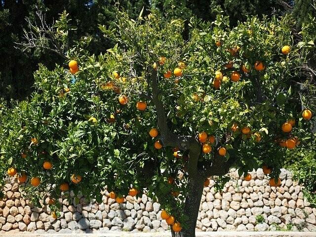 Orange Grove Melts