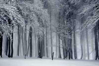 Sweet Snow  Melts