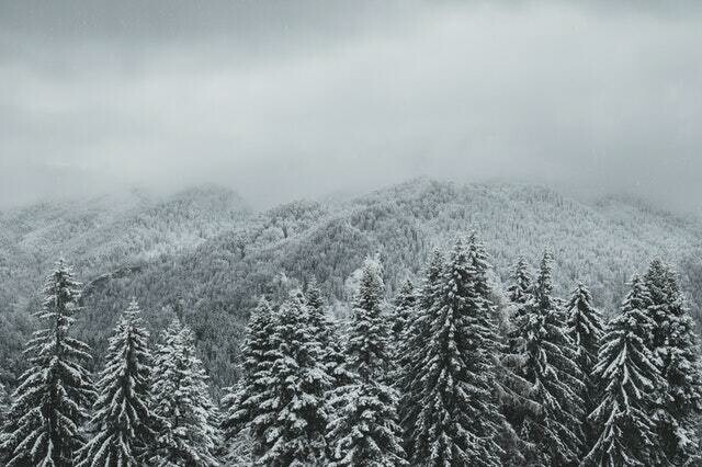 Frozen Pine Melts