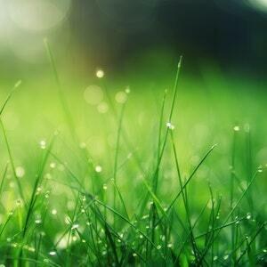 Fresh Cut Grass Melts