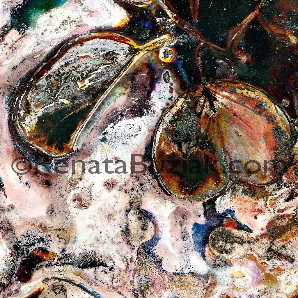 Ipomoea pes-caprae… astringent… / Artwork
