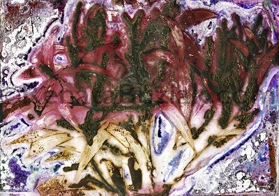 Acacia concurrens… anaesthetic… / Artwork