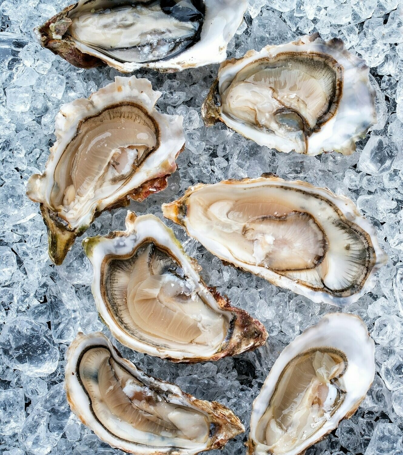 Jersey Oysters Each