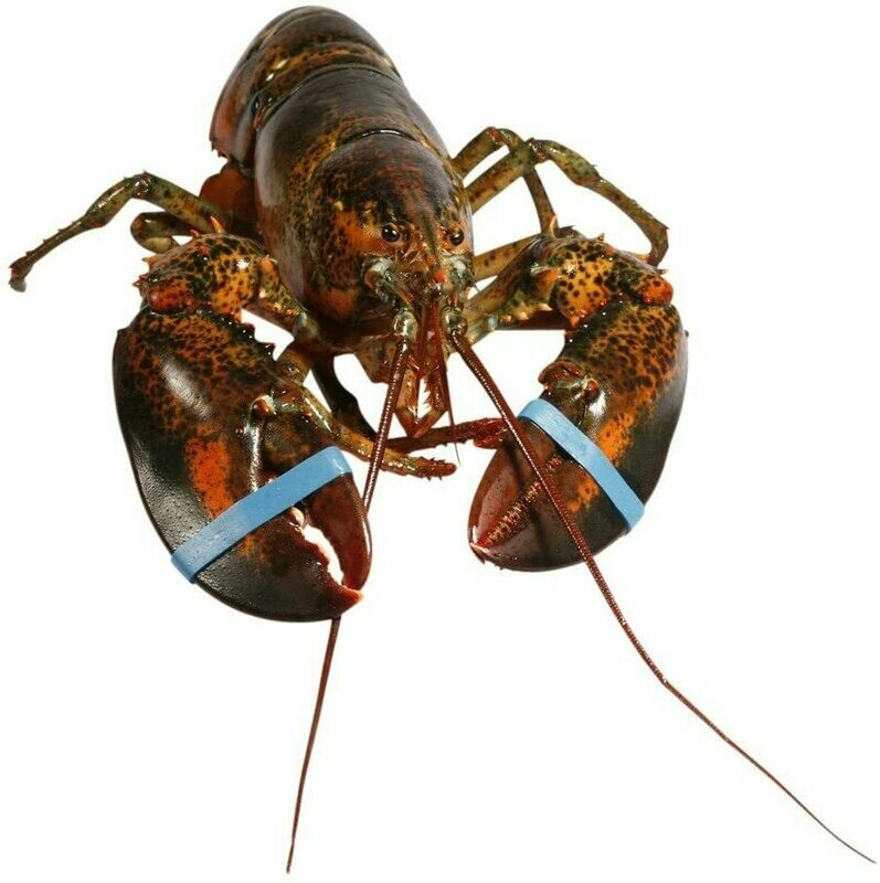 Canadian Lobster 400-600g