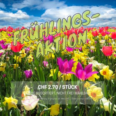 AKTION- Der Frühling ist zurück