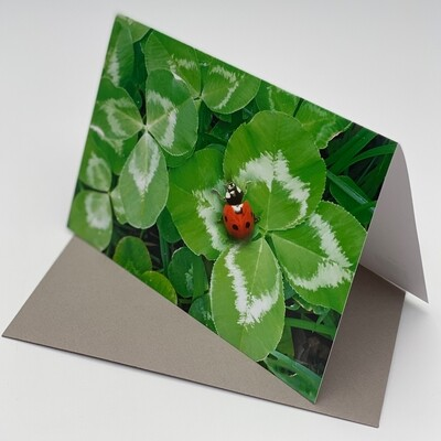Greeting Card - Ladybug