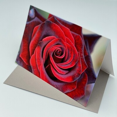 Greeting Card - Rose
